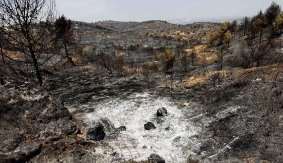 Incendios en Valencia provocarán desertización a medio-largo plazo