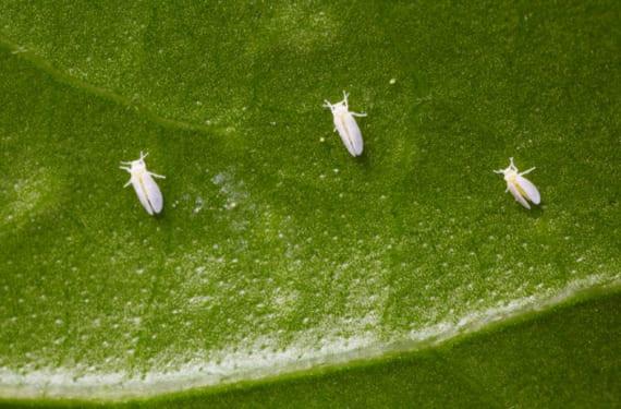 Especies invasivas