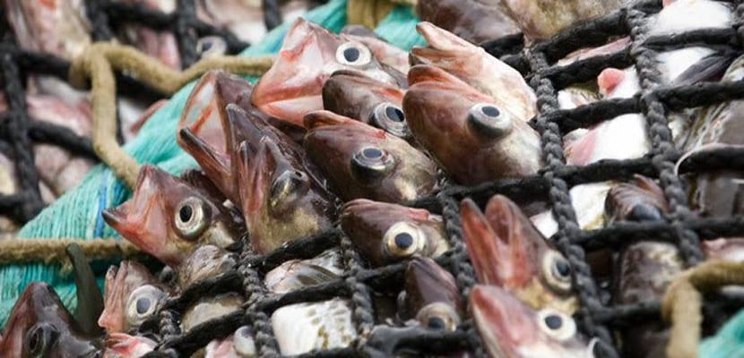 pesca masiva