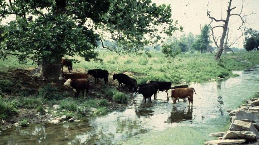 Contaminación del suelo y agua por vertidos humanos