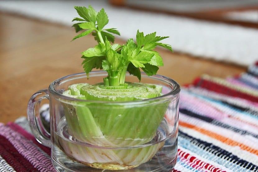 8 vegetales para tener siempre dispuestos para nuestra cocina