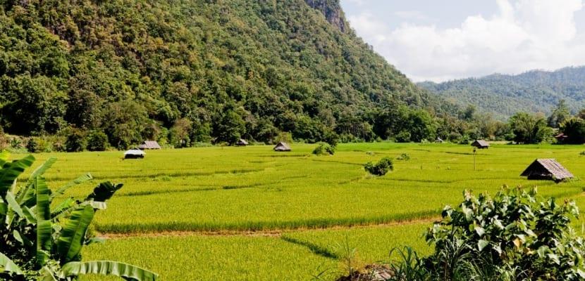 campo-cultivo-de-arroz