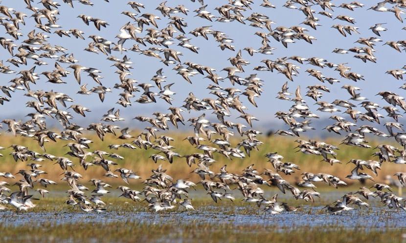 Aves migratiorias