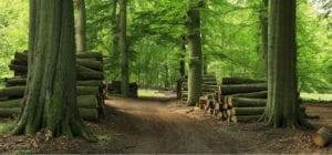 Madera sostenible para bioenergía