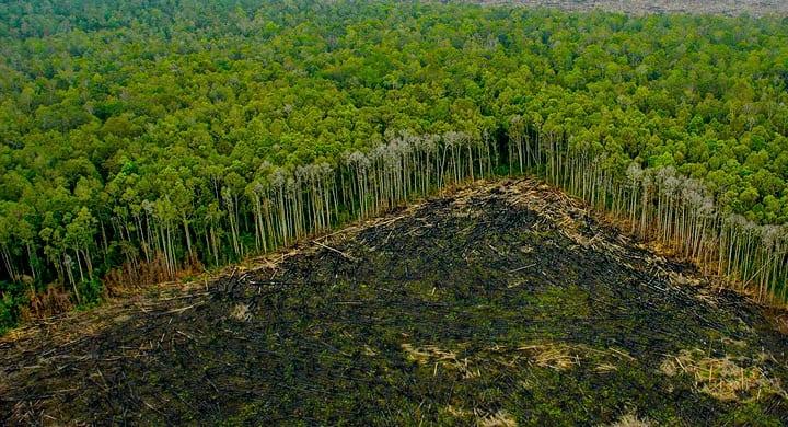 La fragmentación de hábitats por deforestación interrumpen la polinización de las abejas