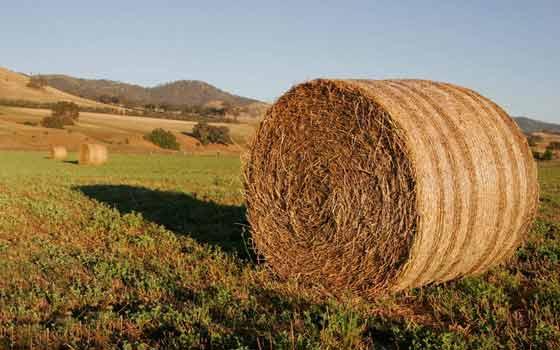 residuos agrícolas para la biomasa