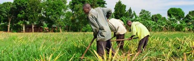 Agricultura Africa