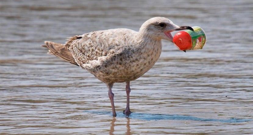 las aves ingieren plásticos sin quererlo