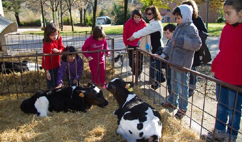 vacas granja escuela