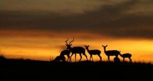 el cambio climático afecta a la seleccion natural