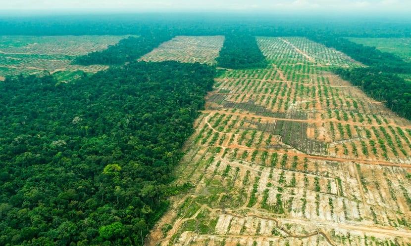 una de las causas de la deforestación es el cambio en los usos del suelo