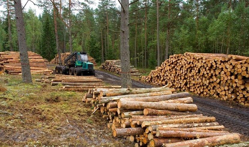 Las causas de la deforestaci n en el mundo y sus consecuencias for Las caracteristicas de los arboles