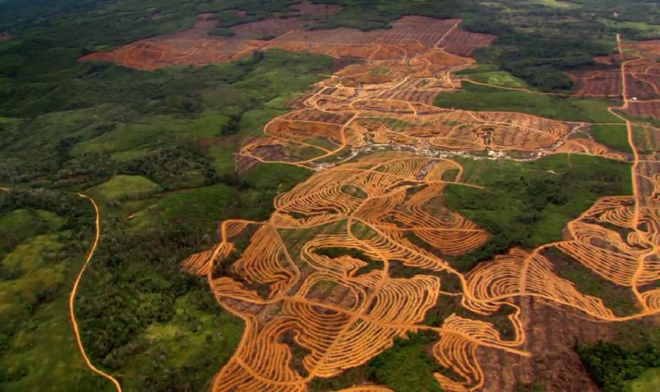 la deforestación en el Amazonas cada vez se acentúa más