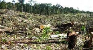 principales causas de la deforestación