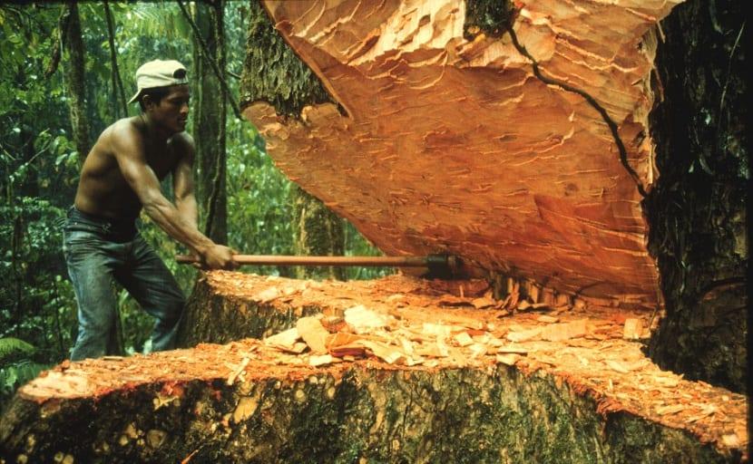 El ser humano tala masivamente los árboles
