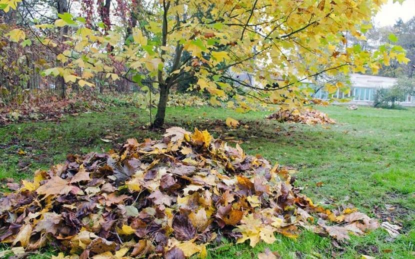 energia de la biomasa a partir de los restos de elementos forestales