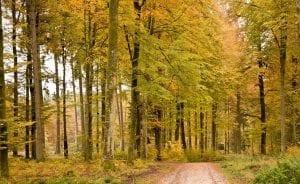 gestion forestal