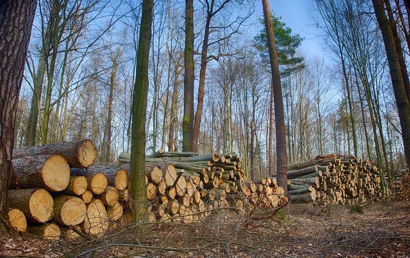 tala controlada y sostenible como método de aprovechamiento de recursos