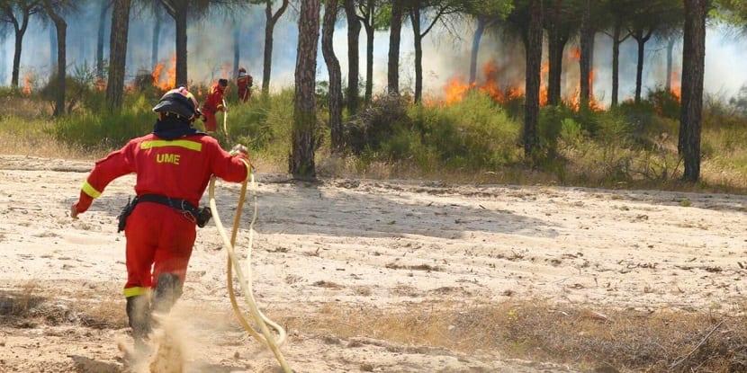 bomberos apagando el fuego en doñana