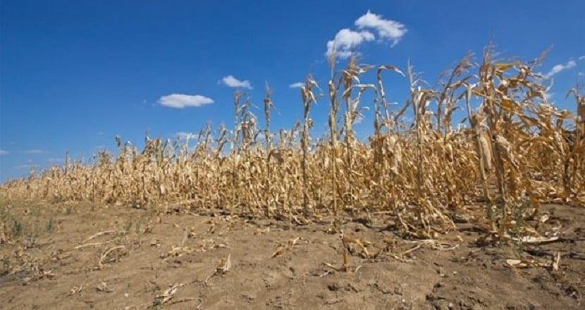 la mala gestion y sobreexplotacion de recursos hace aumentar la desertificacion