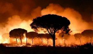 incendio producido en el parque nacional de Doñana