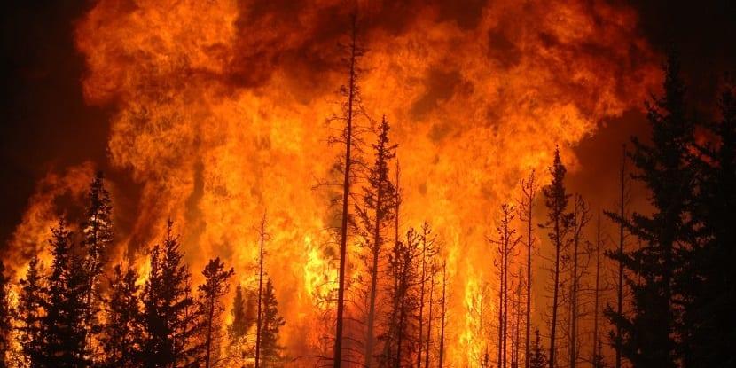 los incendios forestales causan enormes daños