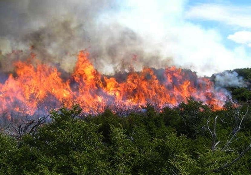 los incendios son la mayoria provocados por el hombre