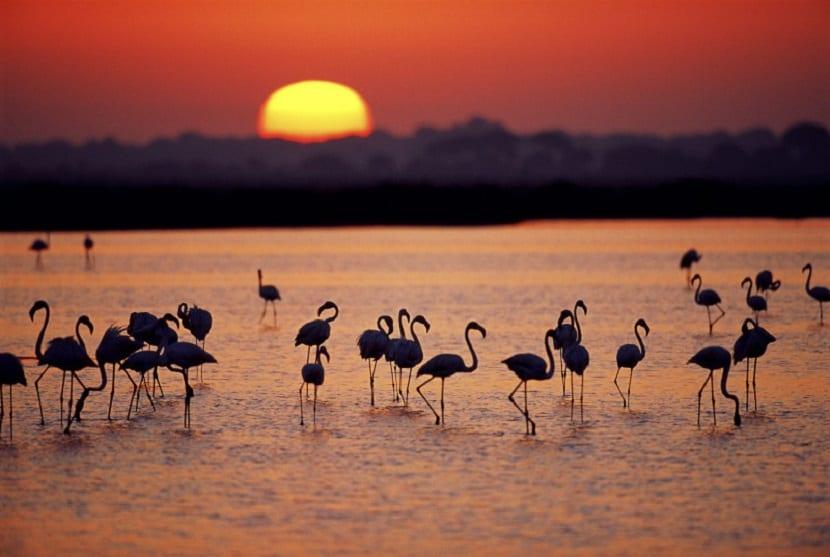 Doñana alberga la mayori biodiversidad de España