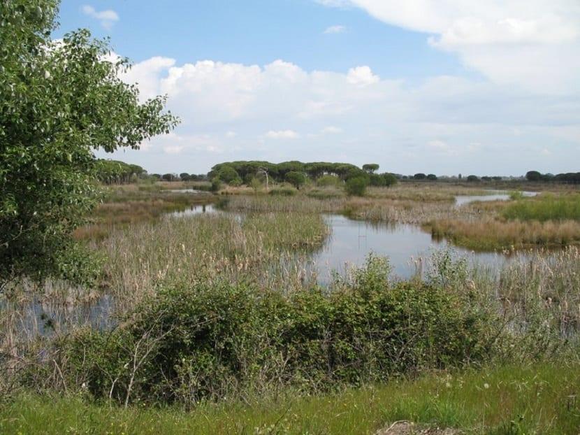 el parque nacional de doñana cuenta con más de 100.000 ha de protección