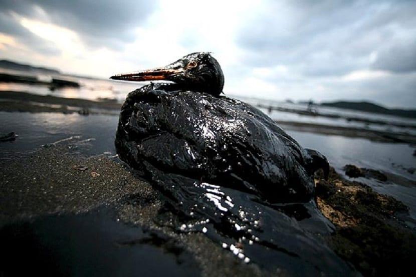 vertidos de petróleo