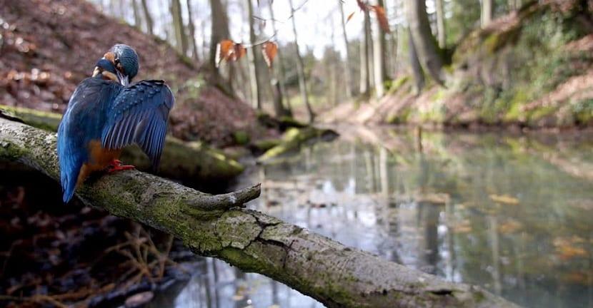 es el biotopo el que sustenta la biodiversidad