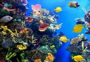 ecosistema marino formado por distintas especies de flora y fauna