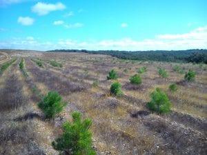 con la ley de montes modificada puede recalificarse un suelo incendiado