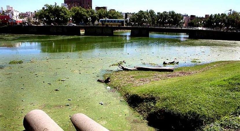 Los lagos y rios eutrofizados son contaminados