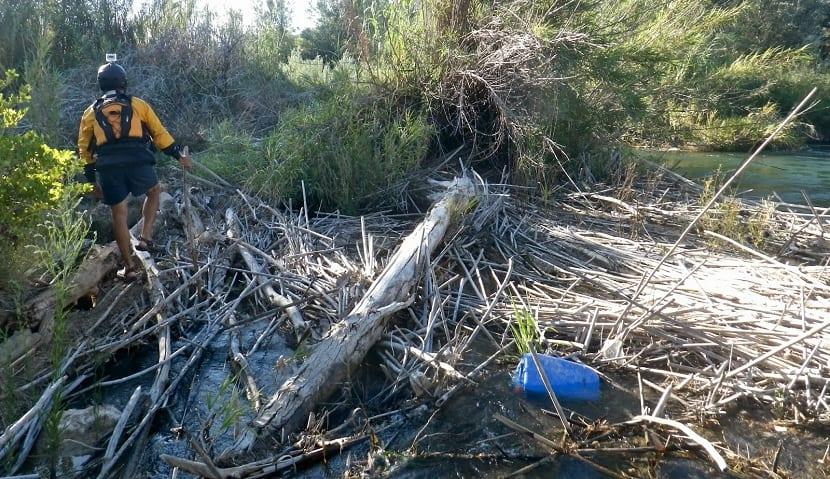 mala gestion forestal puede producir eutrofizacion