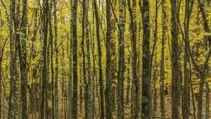 biomasa como energía renovable