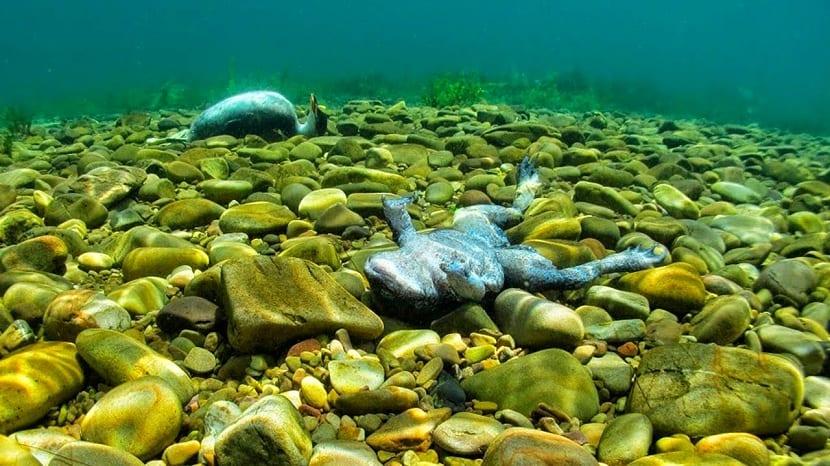 los animales y las plantas mueren en la eutrofización