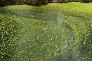 la eutrofización del agua es un proceso natural pero provocado por el hombre