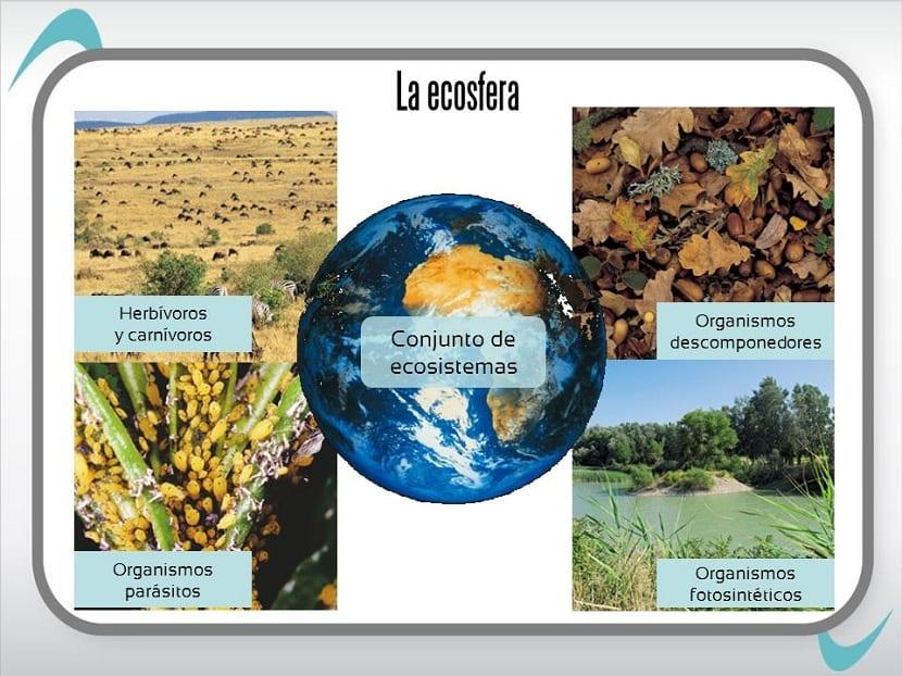 la ecosfera tiene diversos componentes
