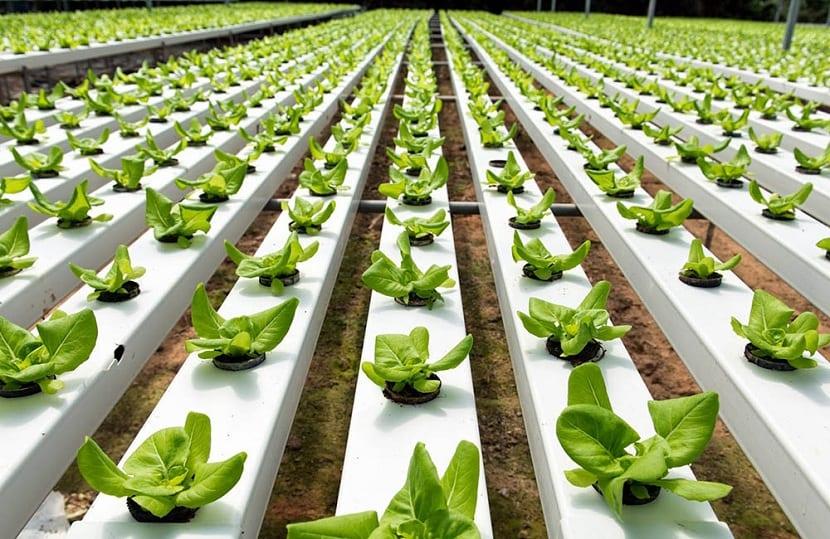 la hidroponía es una forma eficiente de plantación