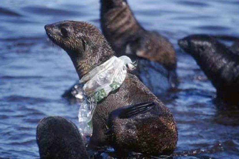el plástico genera impactos enla fauna y flora