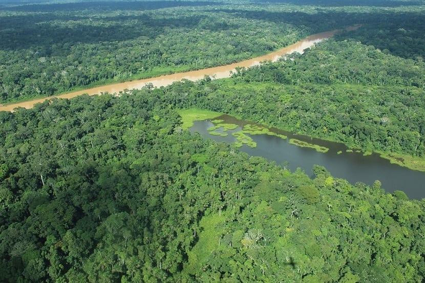 árboles del amazonas
