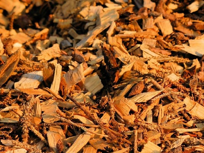 biomasa para calderas