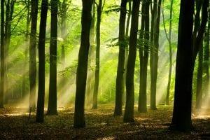 bosques y su interaccion
