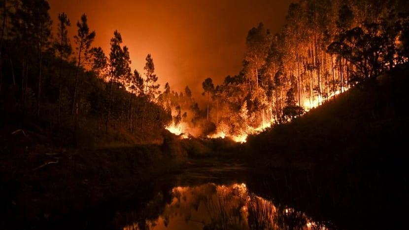 hectareas quemadas por el incendio