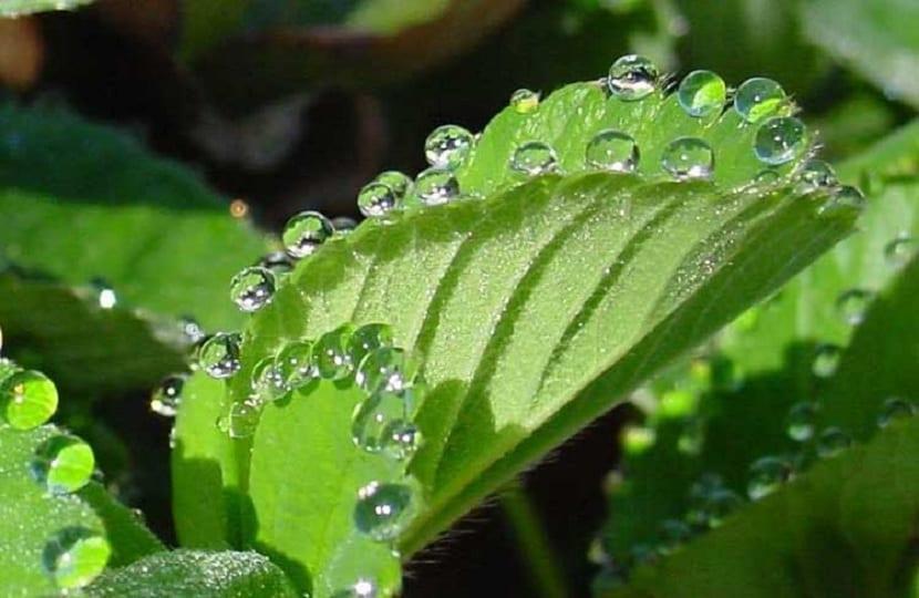 las tplantas transpiran