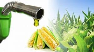 Riesgo alimentario por biocombustible