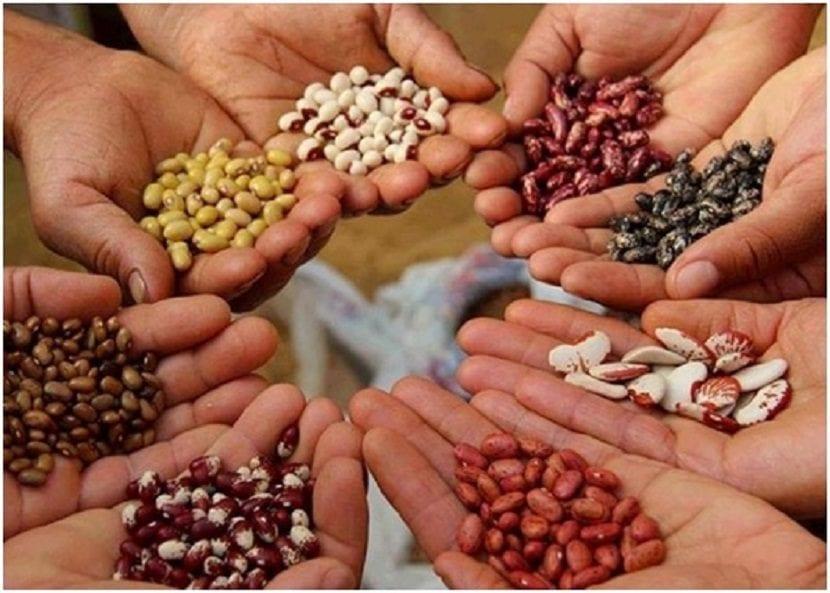 bancos de semillas variedades