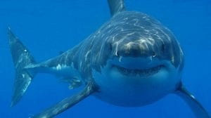 declive del tiburon