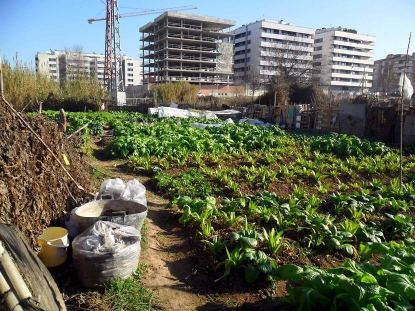 huerto urbano en ciudad contaminada